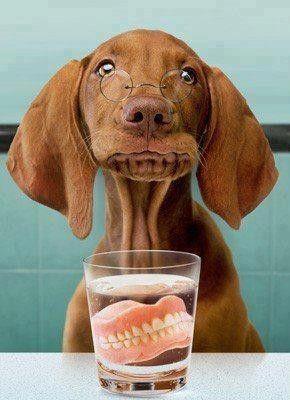 Les dents et les affections dentaires - Page 15 466e3e5b