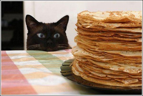 """Résultat de recherche d'images pour """"chat  crêpe humour"""""""